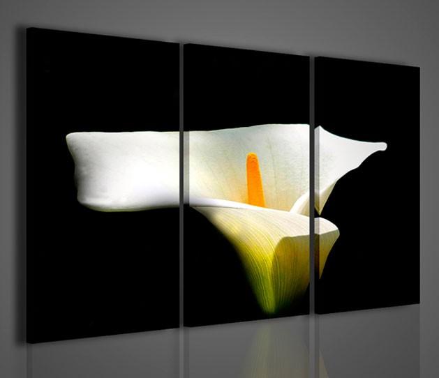 Quadri moderni quadri fiori e piante calle artcanvas2011 for Stampe arredamento moderno